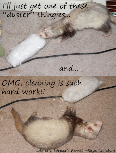 life of a writer's ferret4